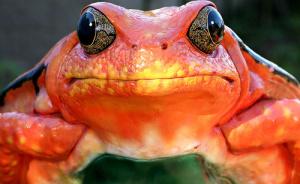 I painted my frog orange